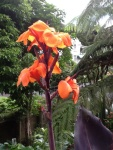 Iris? (My very favorite flower)